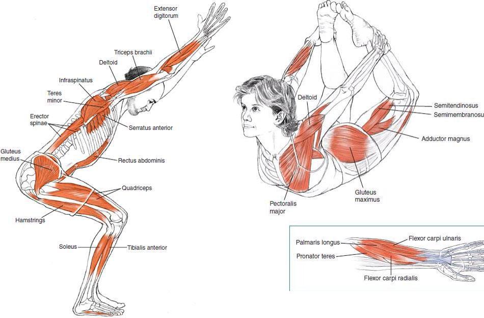 benefici muscolari dello yoga