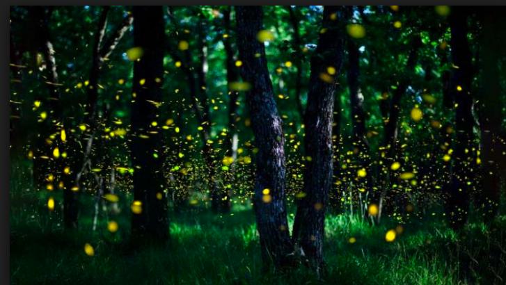 Trekking & Yoga – Escursione notturna fra le lucciole al Parco di Roncolo venerdì 14 giugno