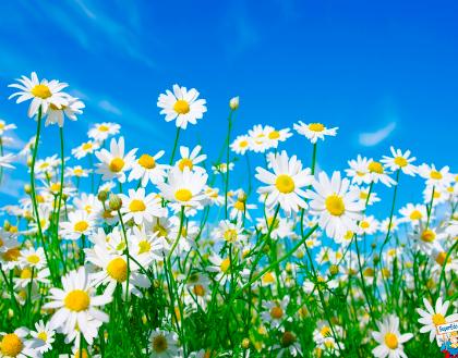 Yin Yang Yoga Primavera – seconda ed. sabato 20 aprile