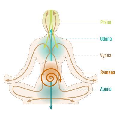 Respiro consapevole: anatomia postura visione Yoga